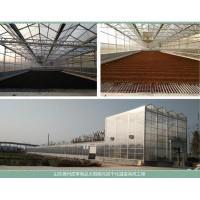 煜林枫太阳能皮革污泥干化处理系统