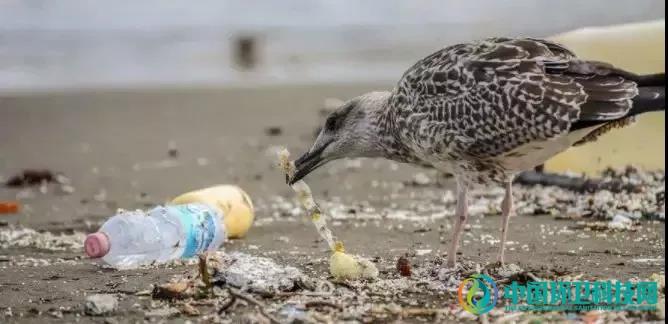 为什么要垃圾分类?在珠海应该怎么分?速来围观…