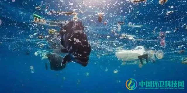 """""""海上环卫""""机制已经建立,但海洋垃圾处置仍有难点"""