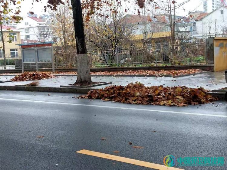 """黄色的落叶路上的那些红装人——""""城市美容师"""""""