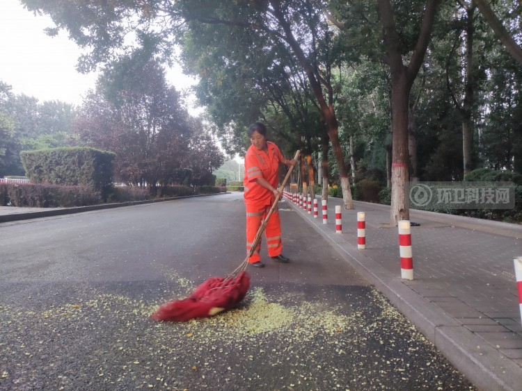 槐花落满地 环卫工人清扫忙